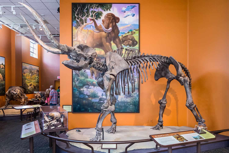 Mastodon Skeleton at the San Diego Museum of Natural History