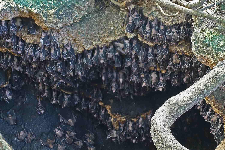 Monfort batcave on Samal Island