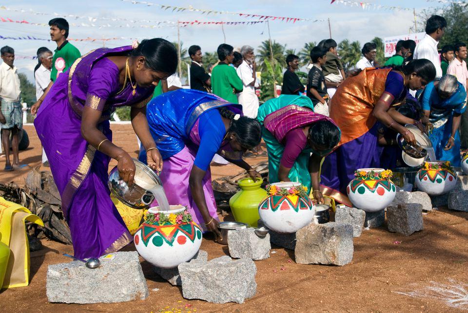 Pongal festival.