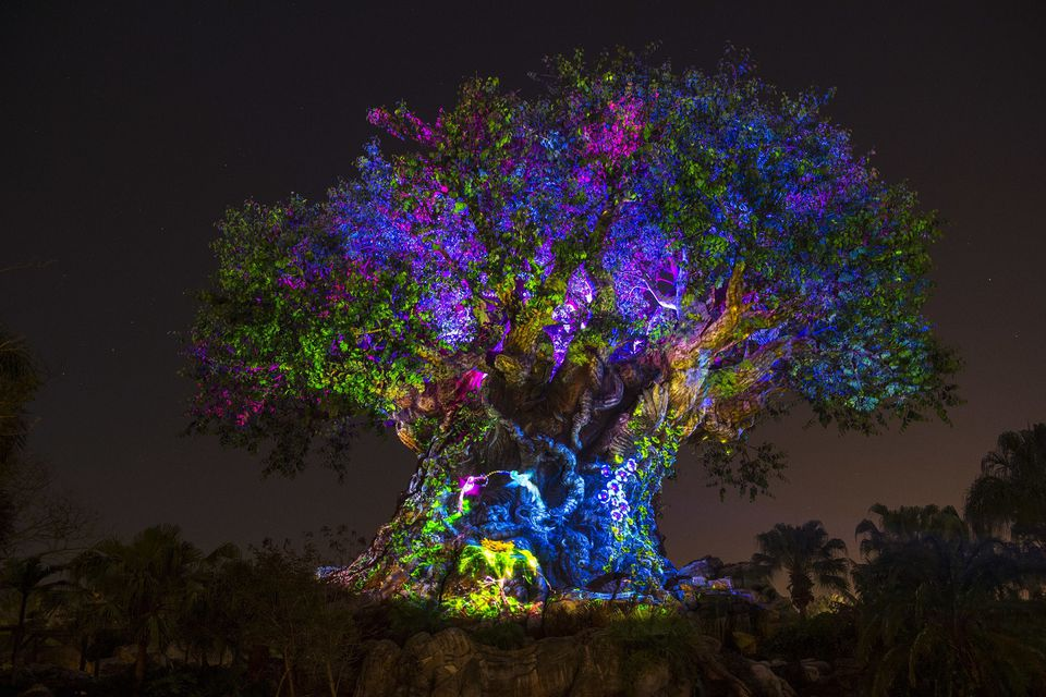 Tree of Life Awake at Night
