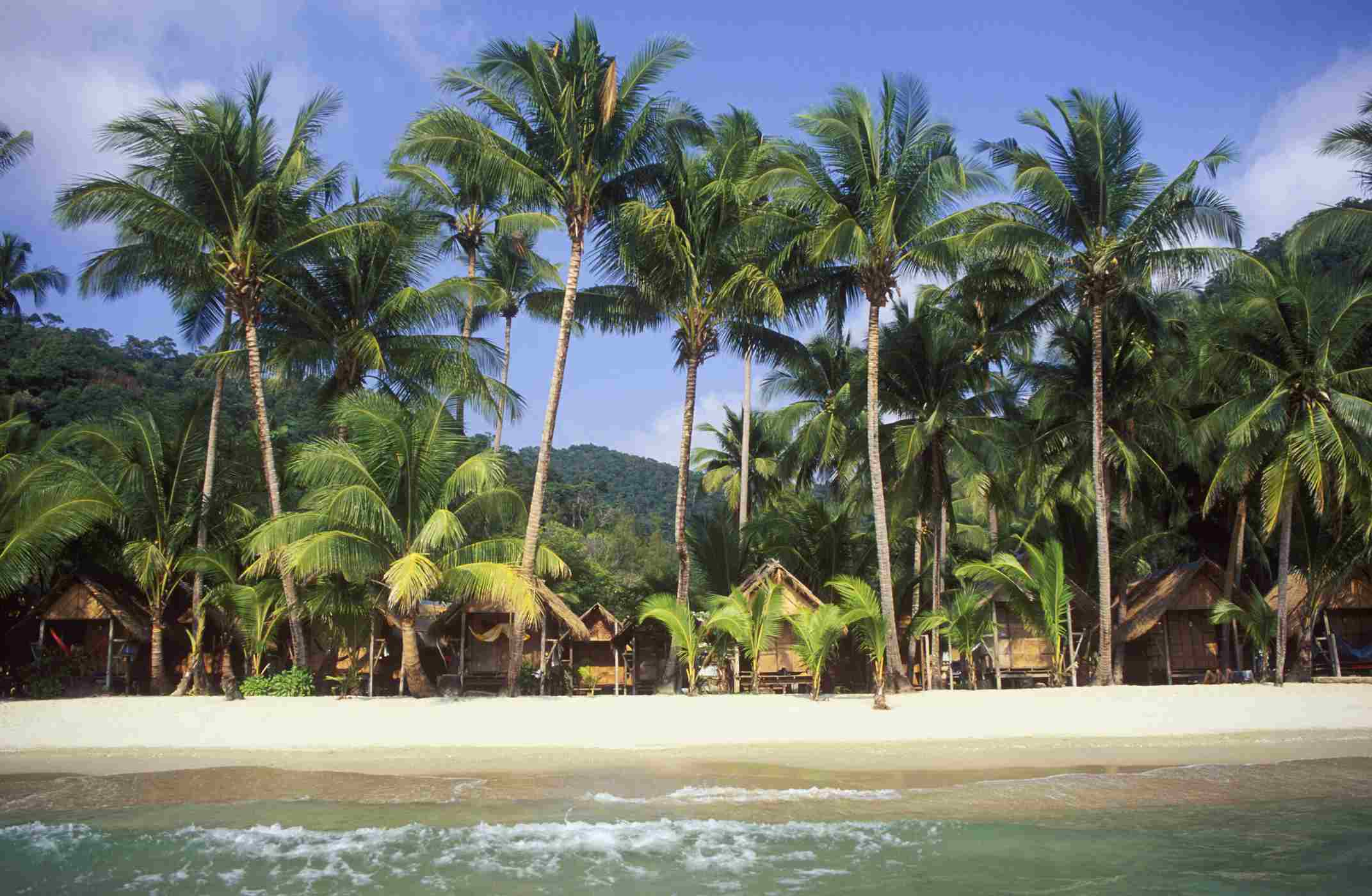 Palm trees and bungalows at White Sand Beach, Koh Chang