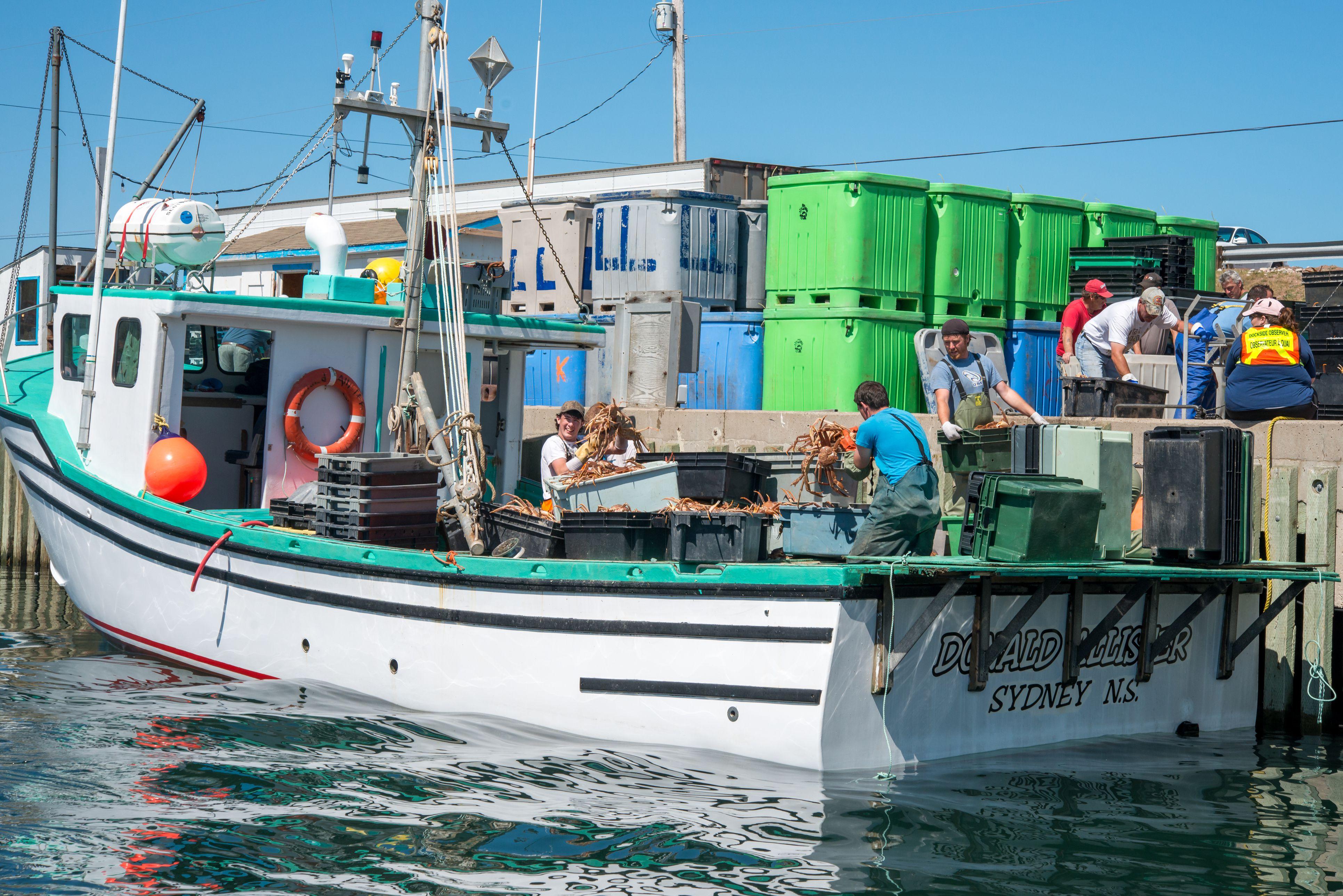 Fishermen are unloading snow crabs at Pleasant Bay, Cape Breton, Canada