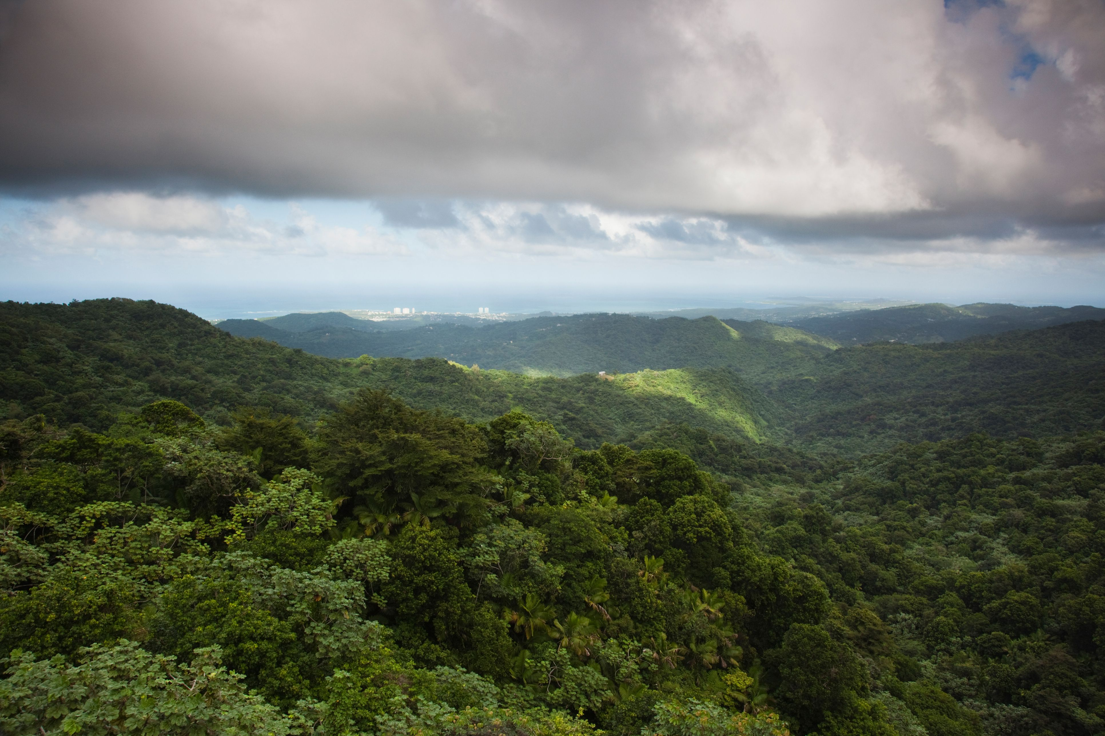 High angle view of El Yunque Rainforest from the Yokahu Tower, El Yunque, Puerto Rico