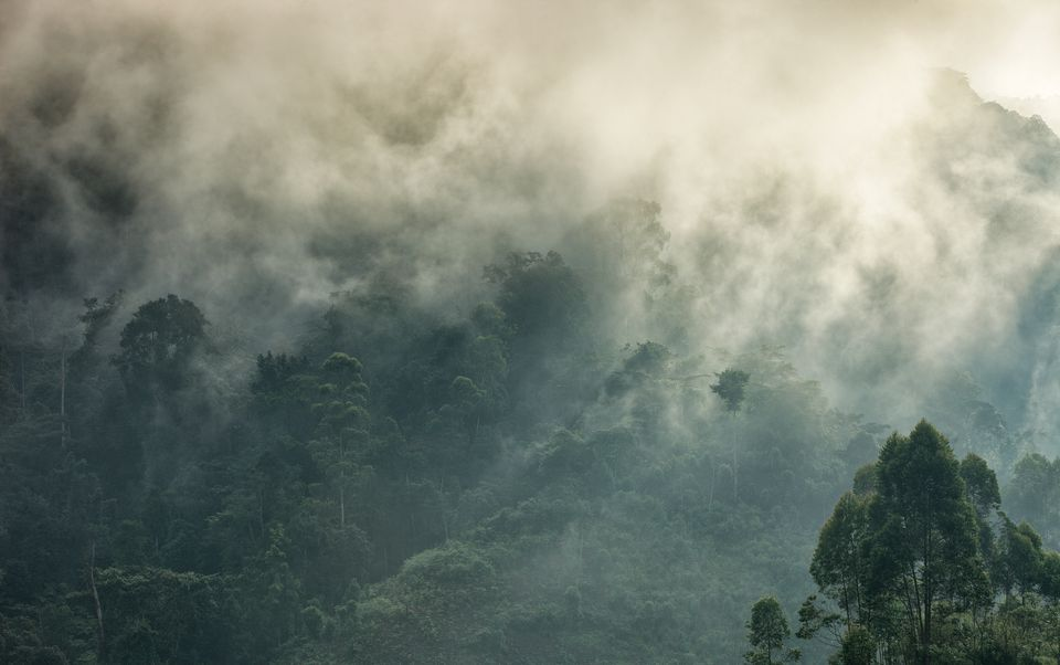 Mists rising over Bwindi Impenetrable Forest, Uganda