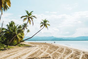 An empty beach with palm trees and clear water in Miches