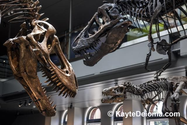 Dinosaur Hall at the Natural History Museum of Los Angeles County