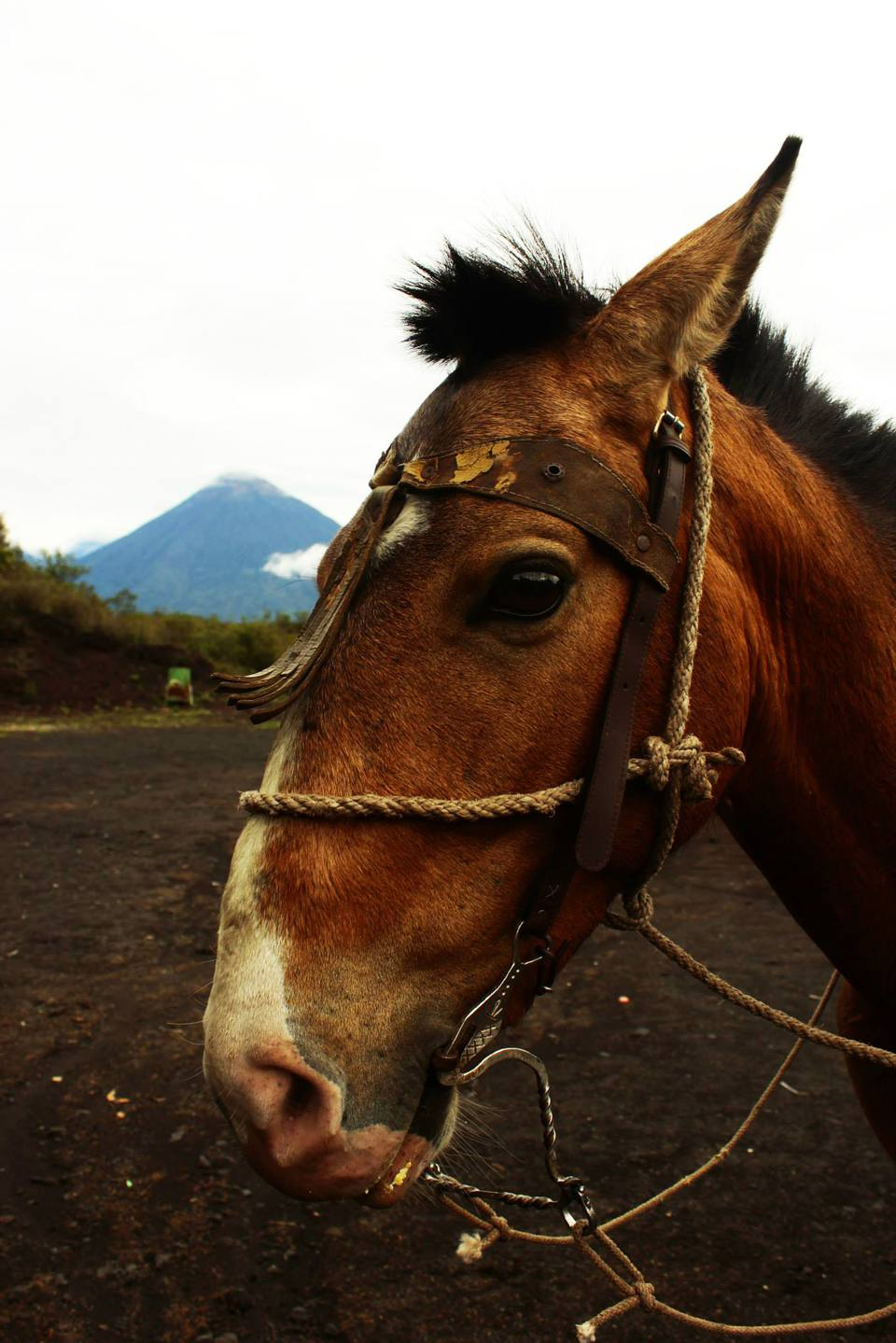 a horse with a volcano in the background in Guatemala