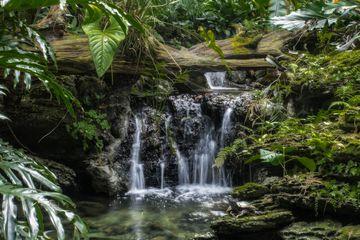 mini-waterfall in pinecrest gardens, Miami, Florida