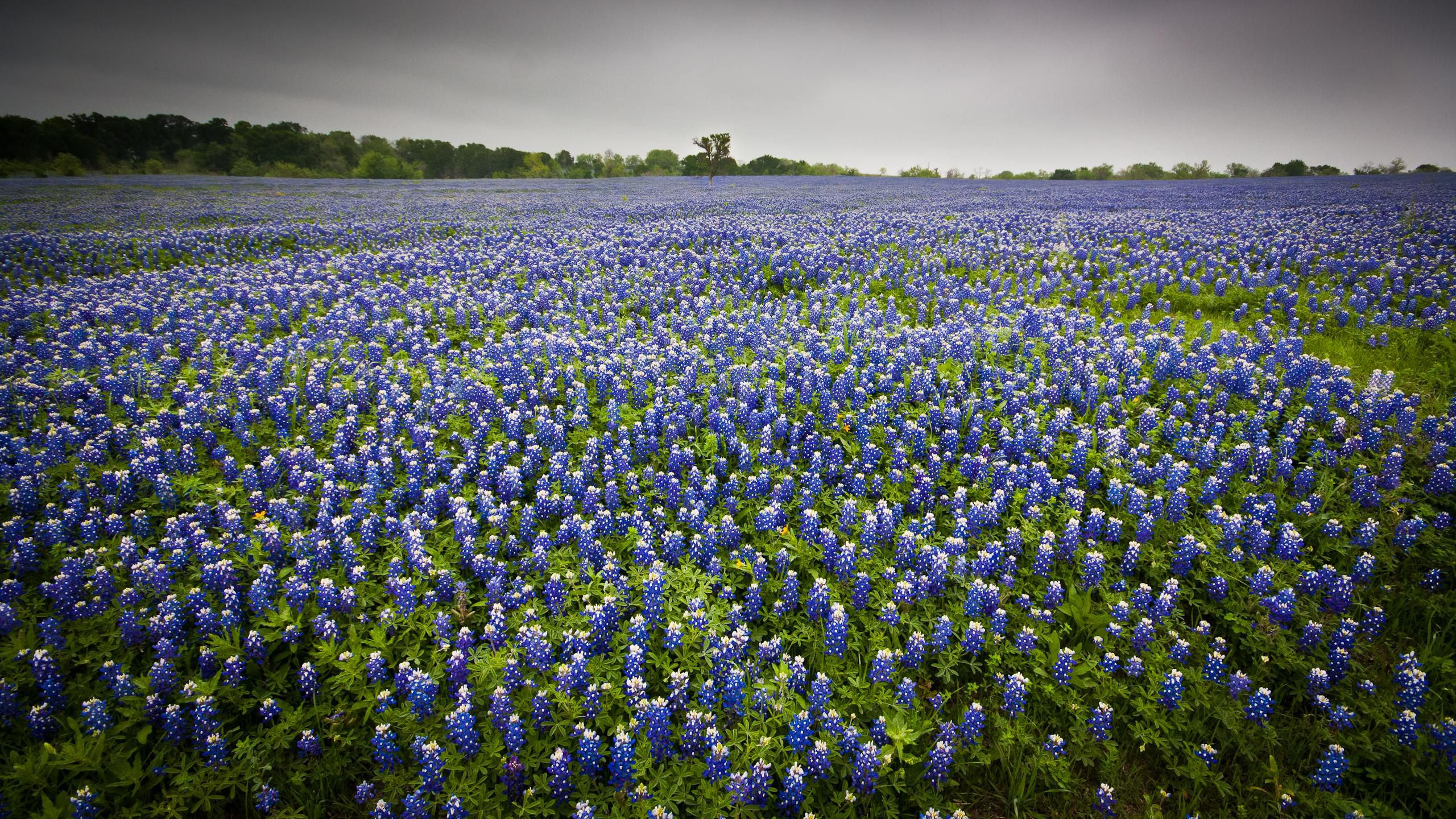 Where to See the Bluebonnets Bloom in Texas