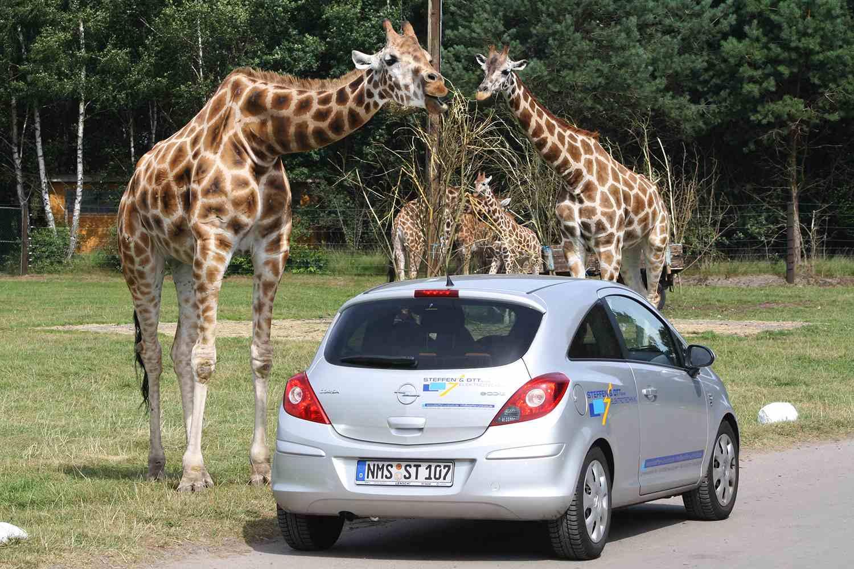 Serengeti Park Hodenhagen, Germany