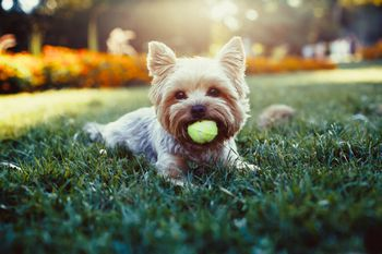 Low-Cost and Free Spay/Neuter Services in Oklahoma City