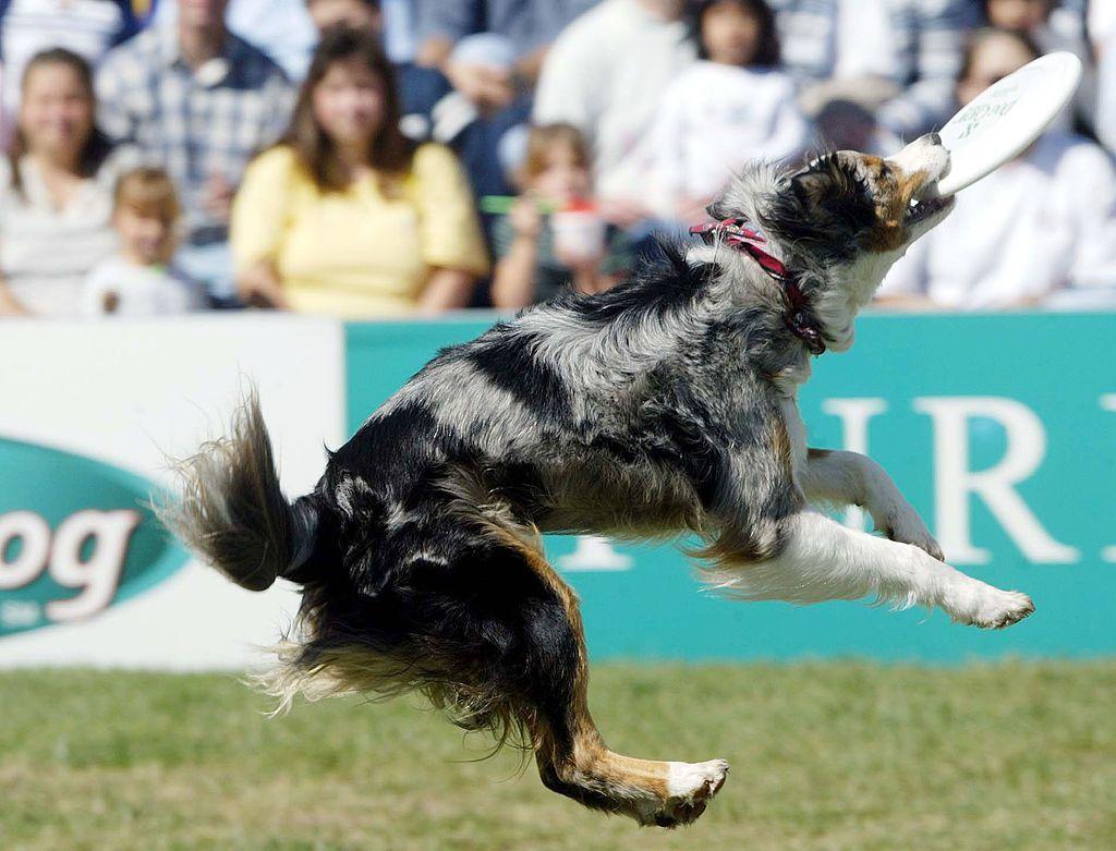 Purina Dog Chow Incredible Dog Challenge