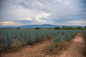 Tequila Farm in Tequila, Mexico