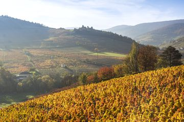 A view of autumn vineyards in France