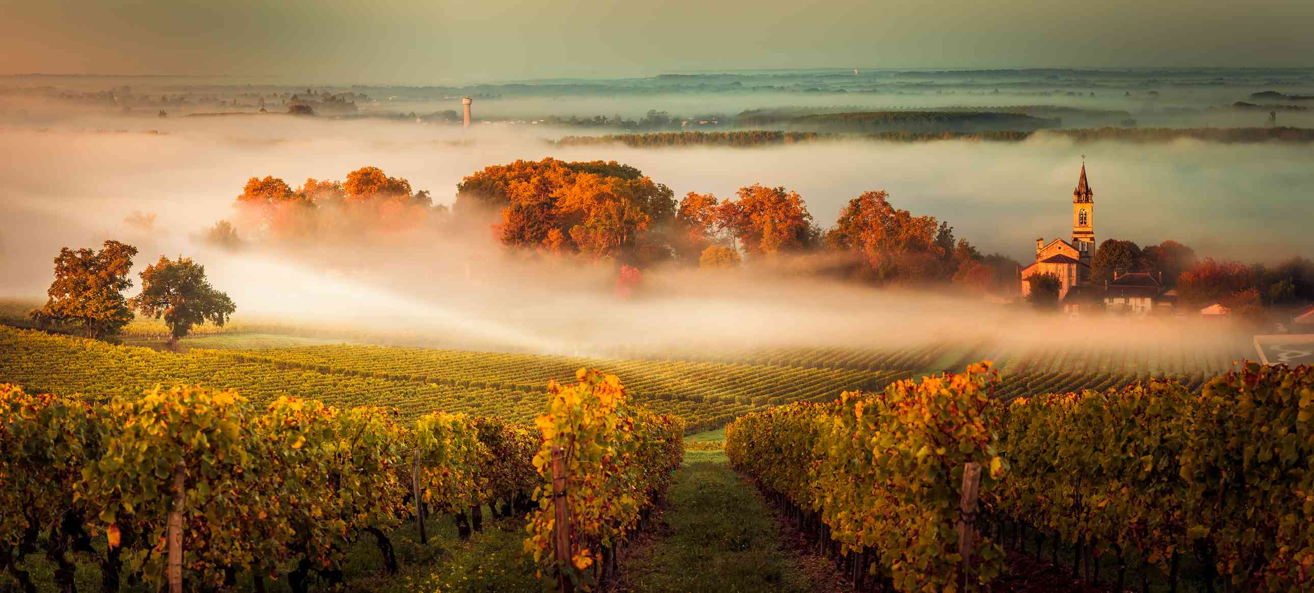 10 Best Wine Regions In France That You Must Visit