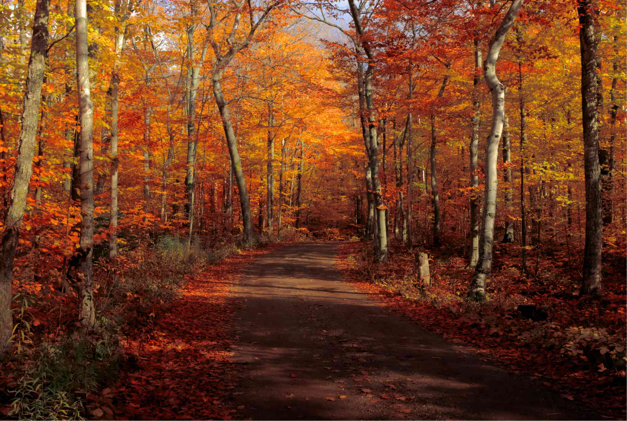 Trail leading through woods during fall season in Door County