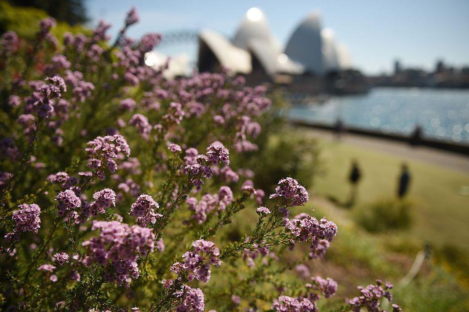 Flowers bloom in the Botanical Gardens in Sydney in spring