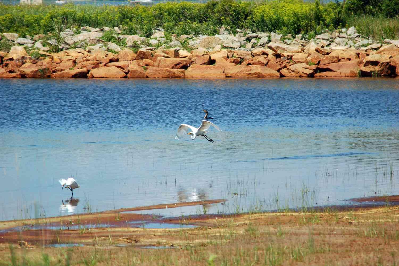 Parker River Wildlife Refuge Birds