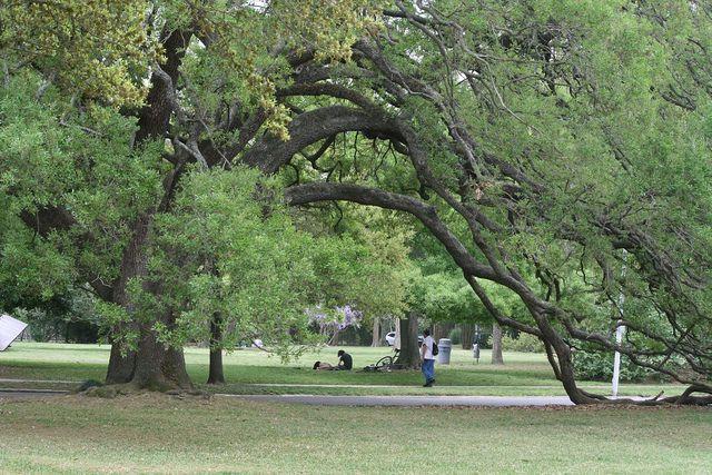 Montrose Houston