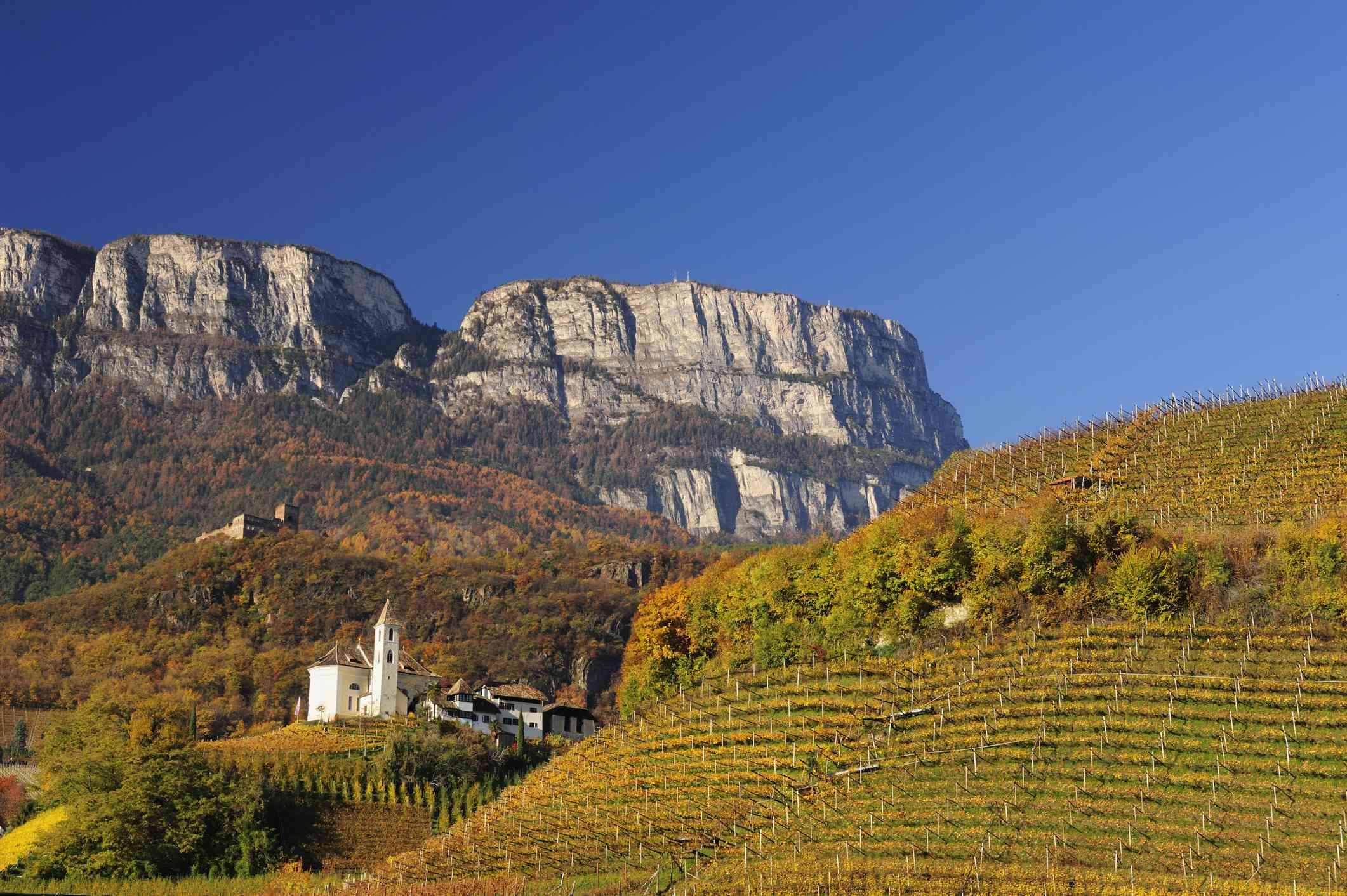 Vineyard and mountains in Alto Adige