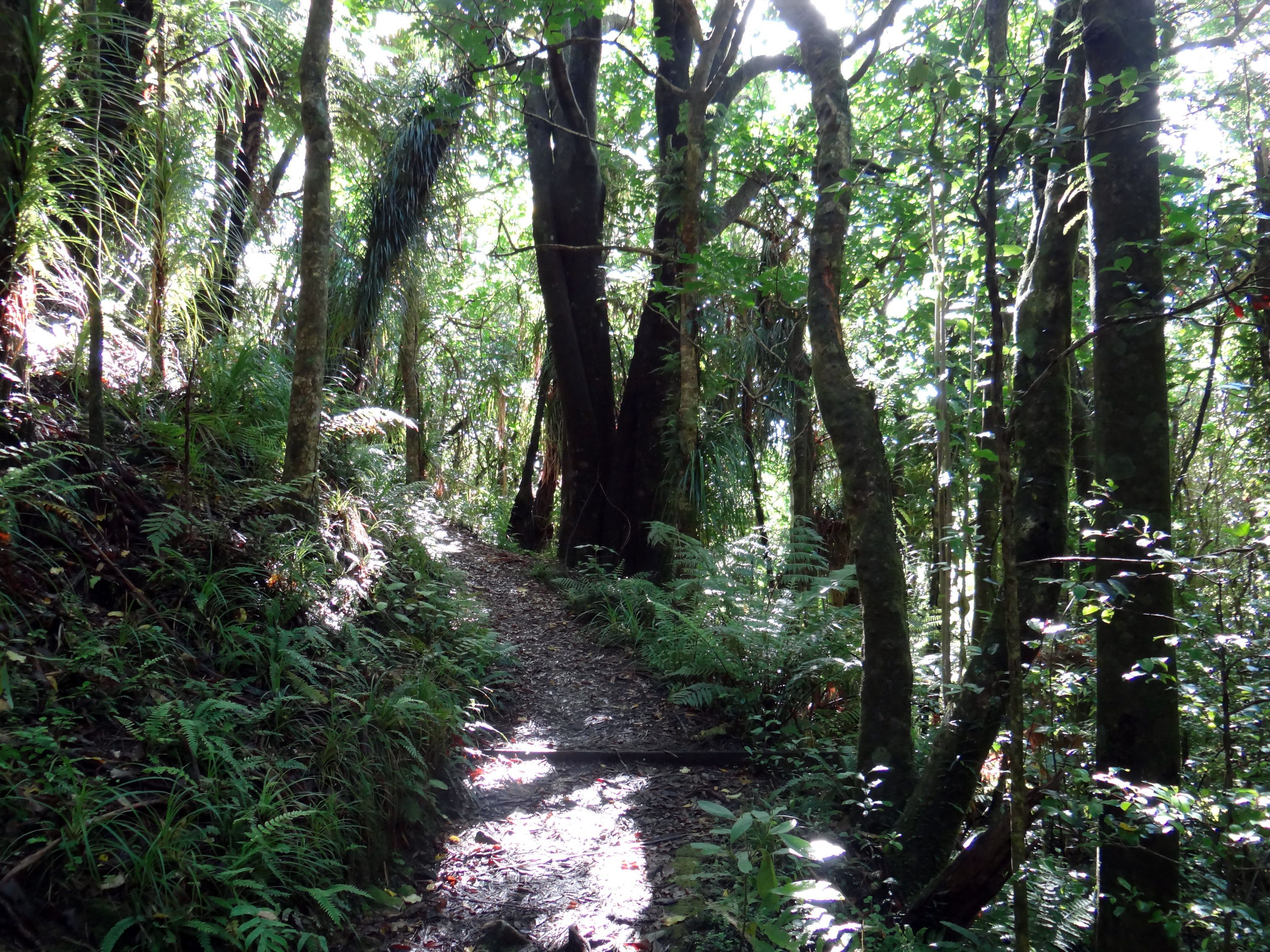 Hiking trail in Ship Cove historic area, New Zealand