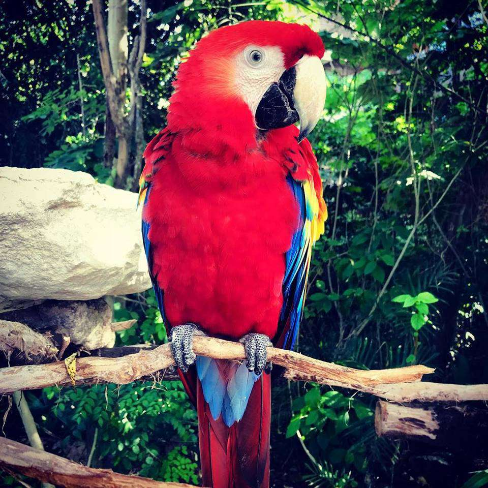 Colorful parrot perches on a tree branch in Cancun