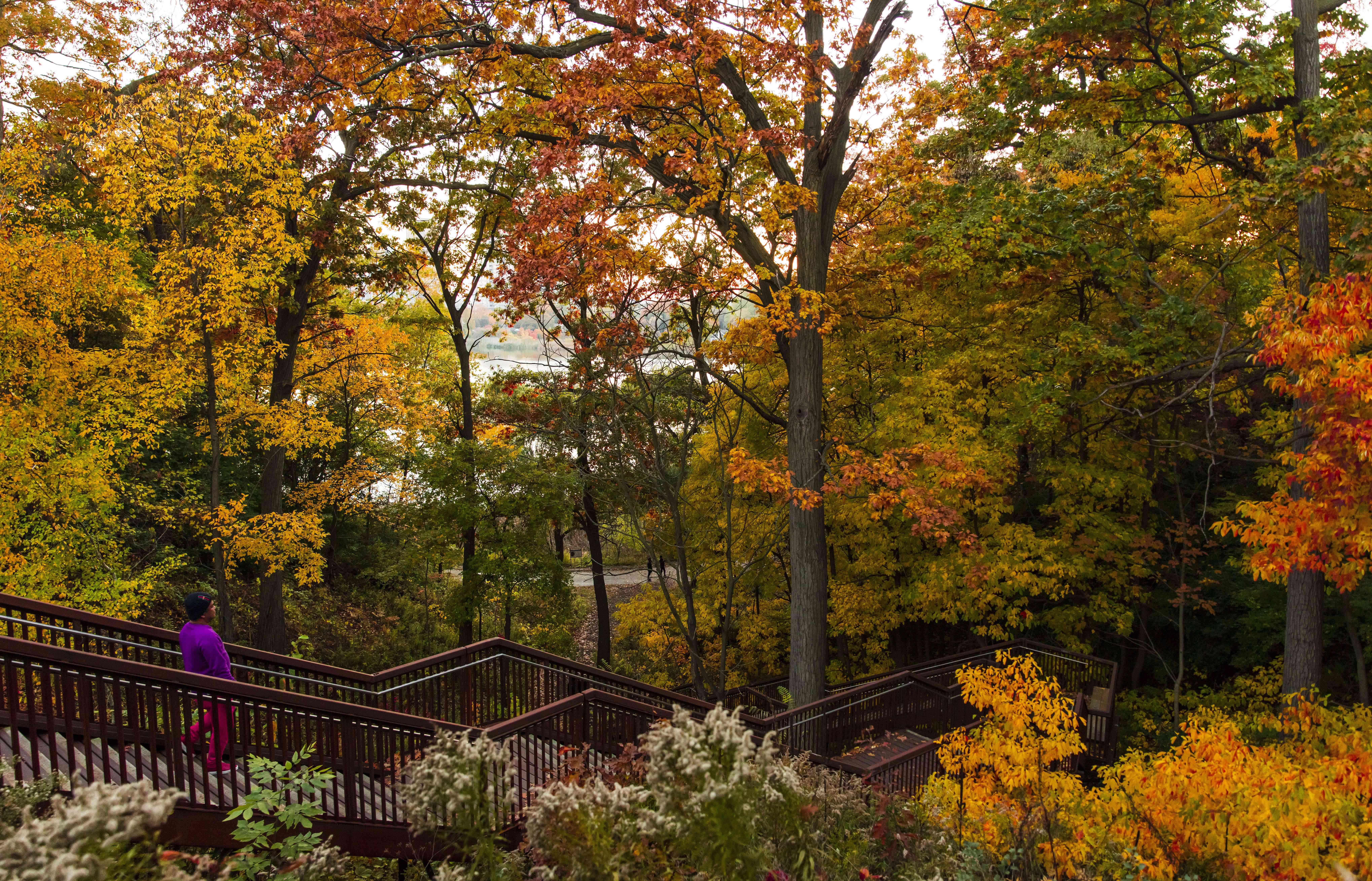 Fall foliage in High Park in Toronto