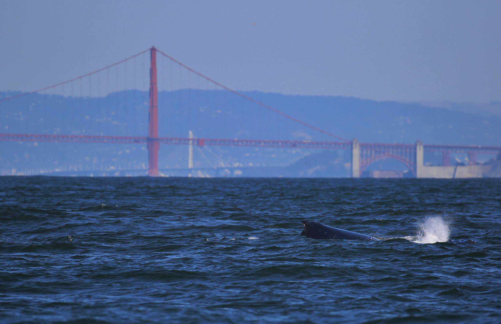 Whale Watching In San Francisco