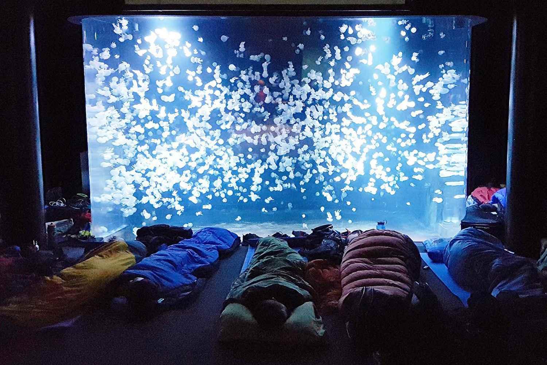 Vancouver Aquarium sleepover
