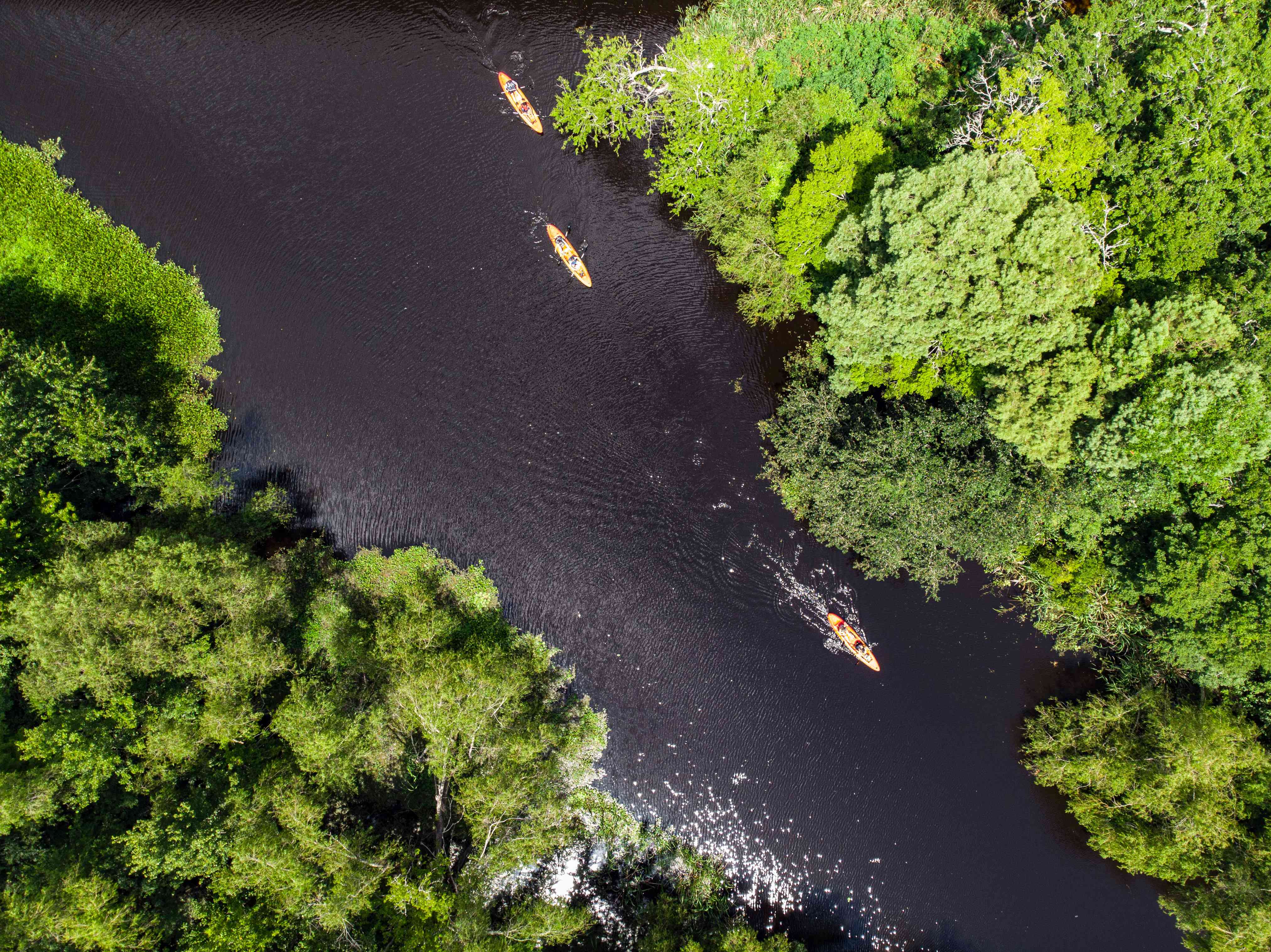 People kayaking down the bayou