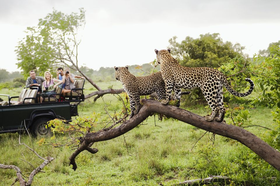 Game viewing in Africa.