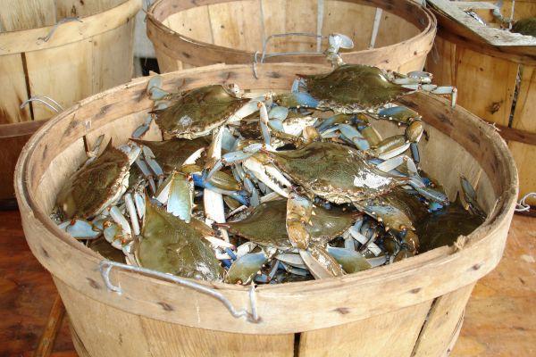 A bucket of crabs