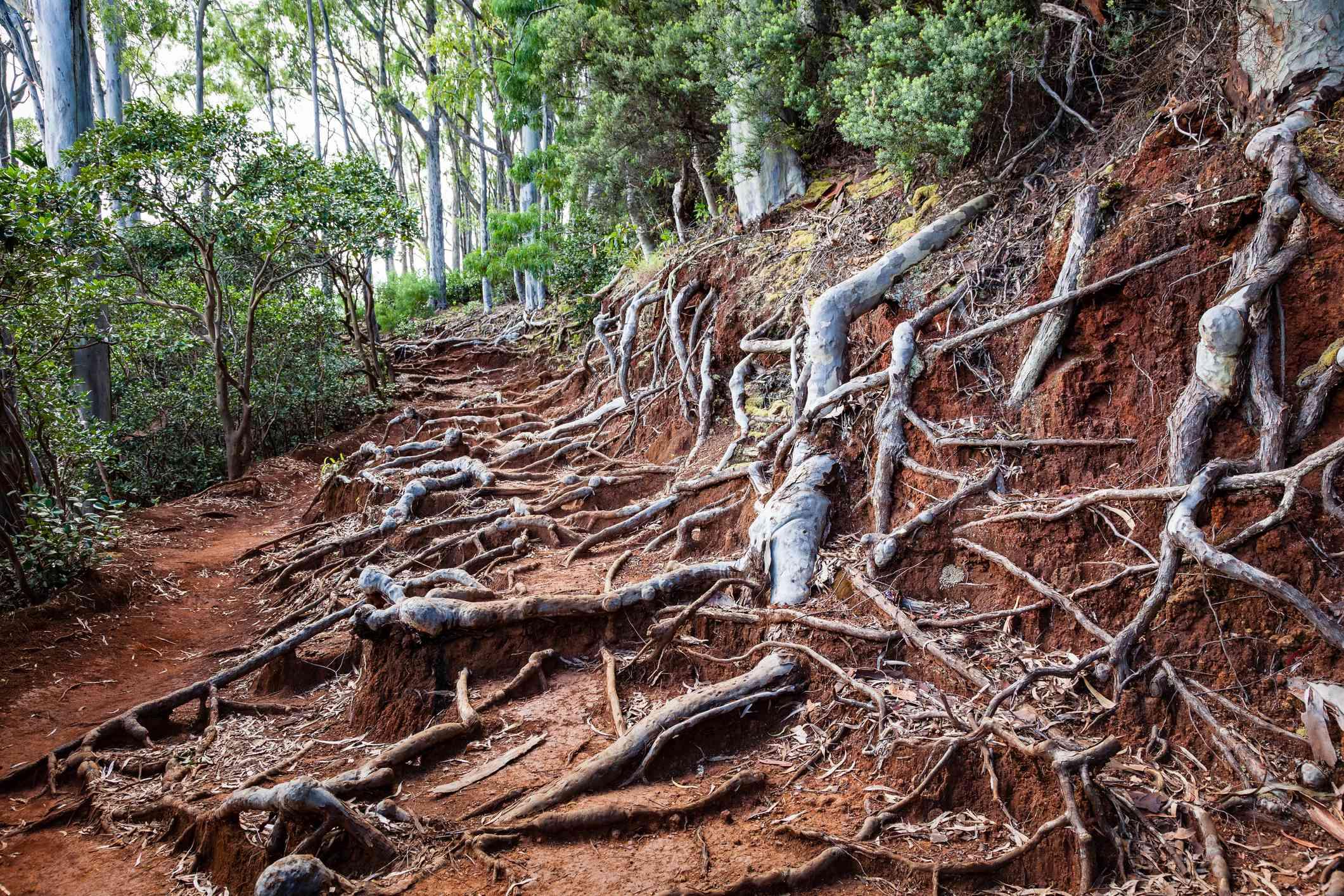 Hawaii Hiking Trail Landscape