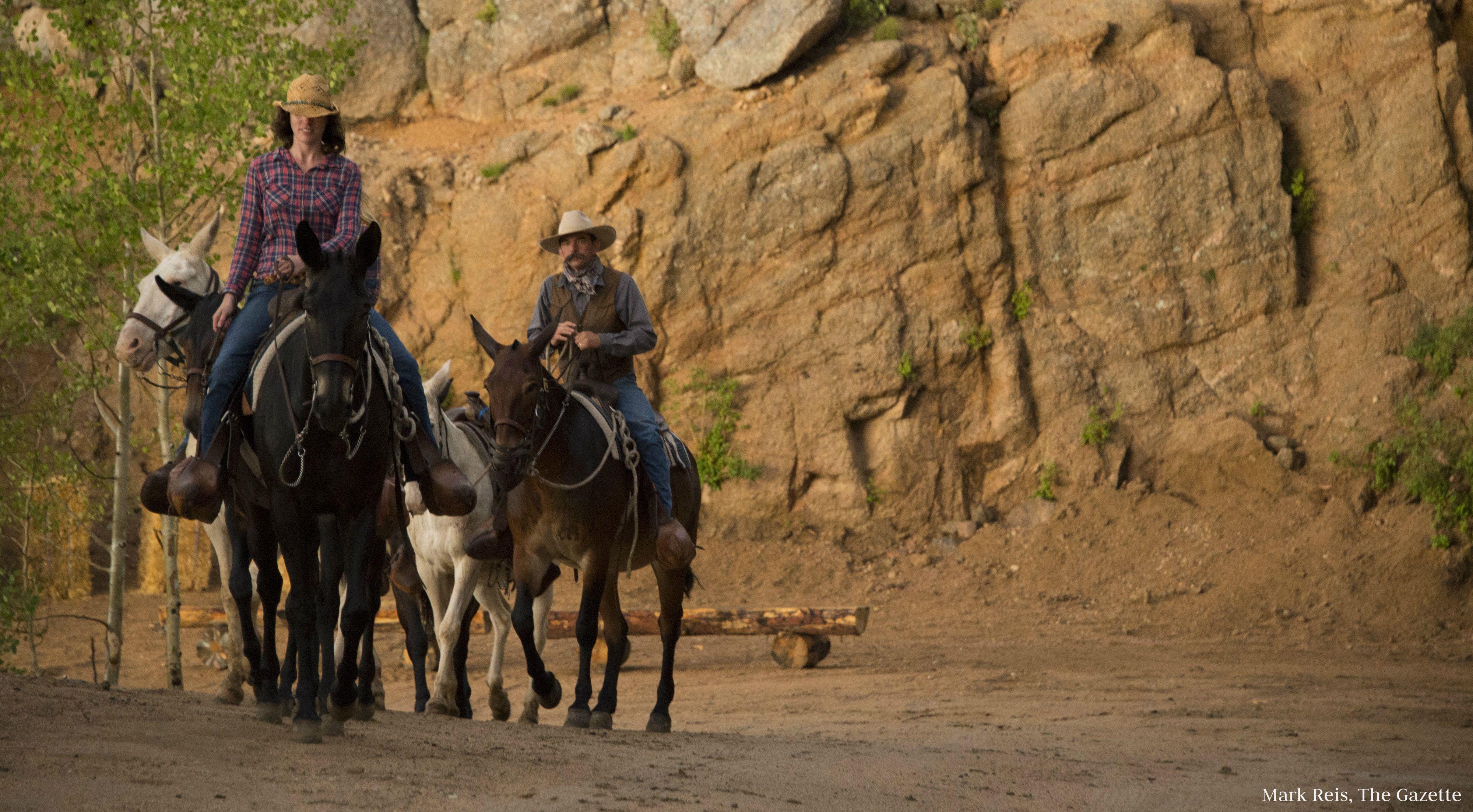 Ride mules at Cloud Camp