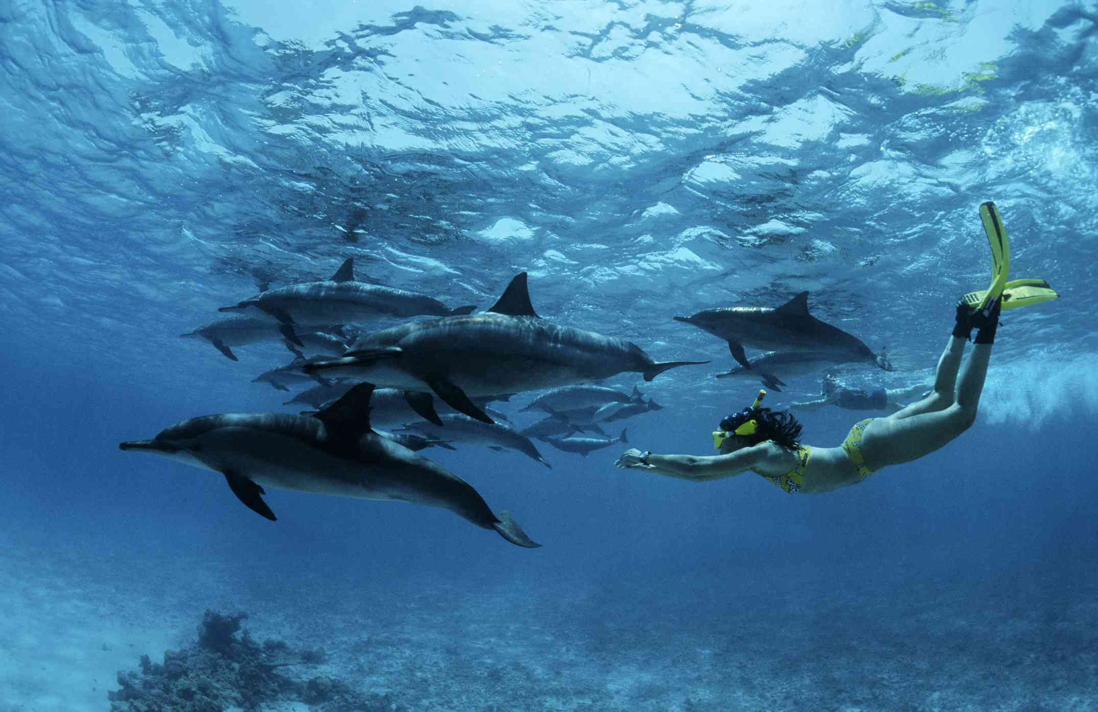 Swimming with dolphins, Egypt