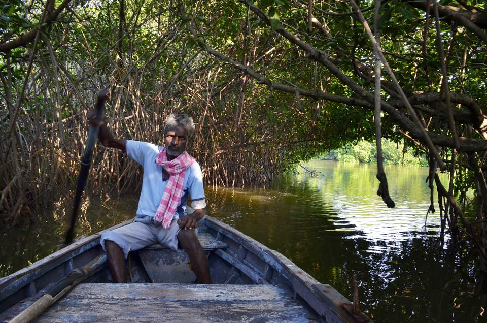 Pichavaram mangrove jungle. Tamil Nadu.