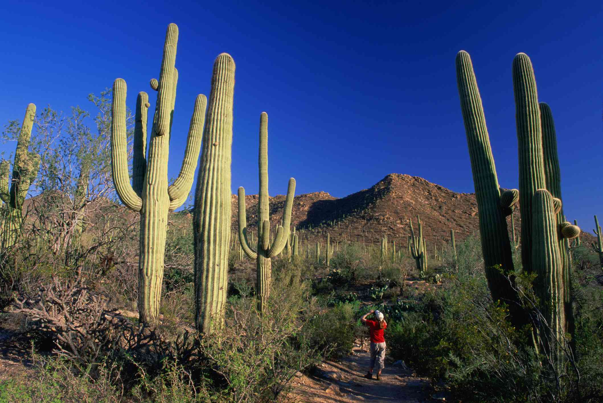 girl photographing cacti