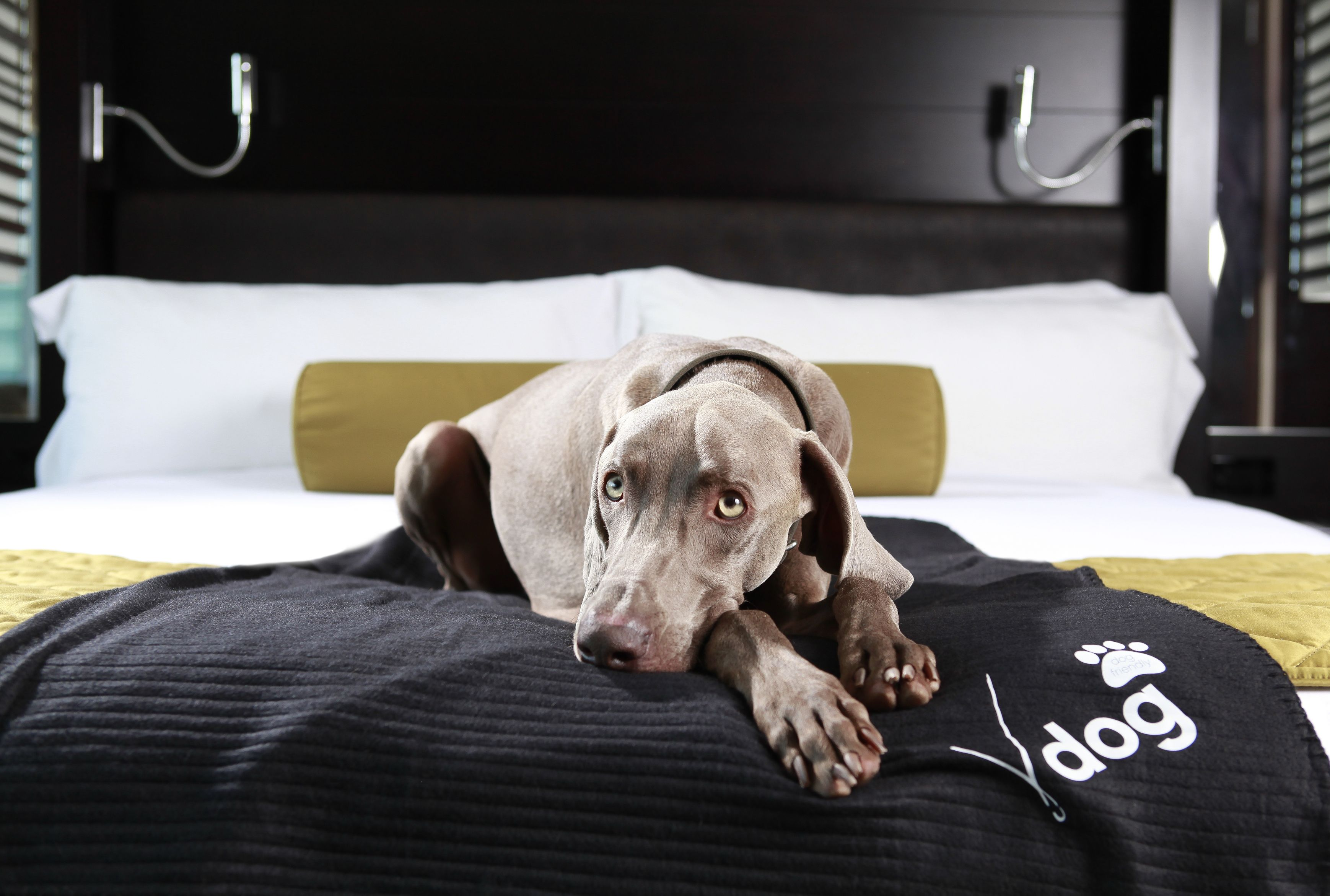 What Hotels Take Dogs In Las Vegas