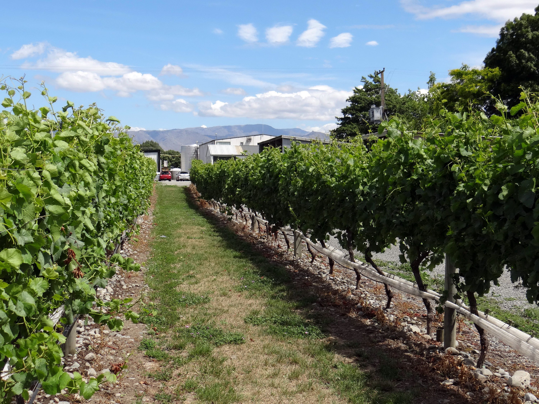 Marlborough winery on the South Island of New Zealand