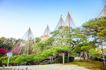These spider's web of ropes called yukitsuri, is a technique to prevent the snow from crushing the pine trees at Kenrokuen Garden.