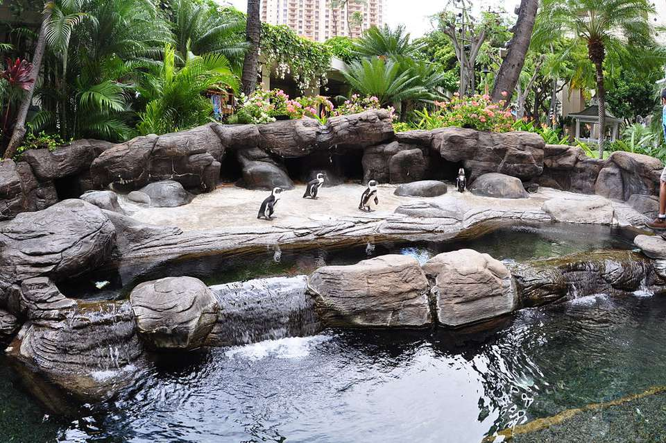 Hilton Hawaiian Village Penguins Oahu