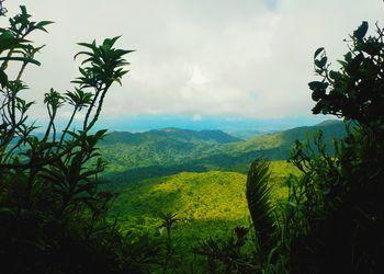 El Yunque National Rainforest