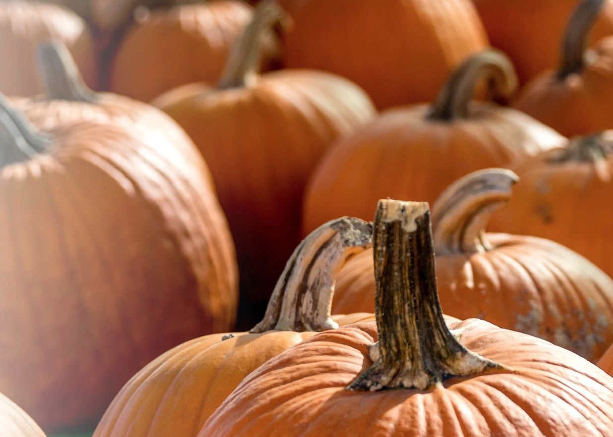 Mainstay Farm's fall pumpkin days