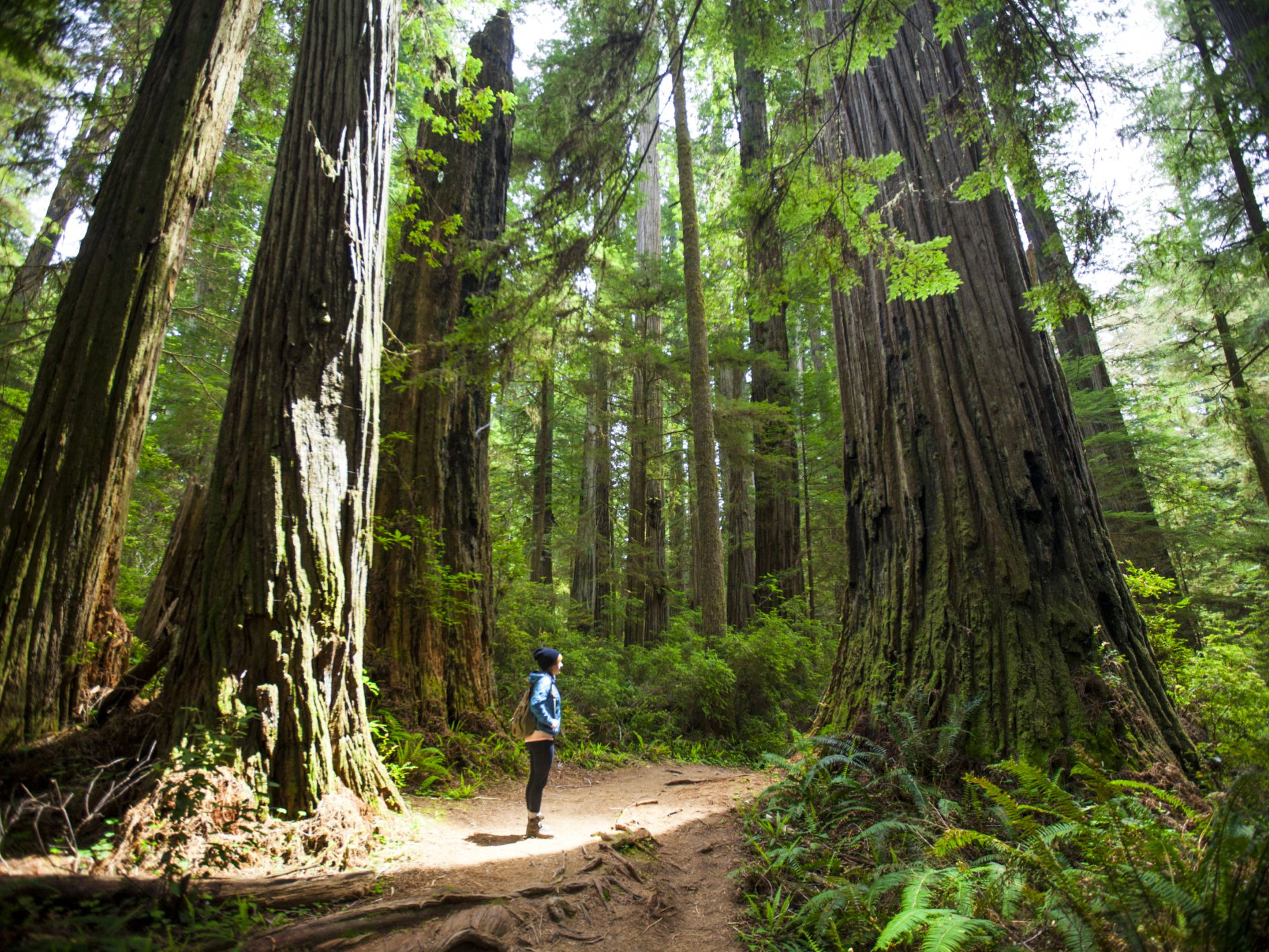 Visiting California's Redwood National Park