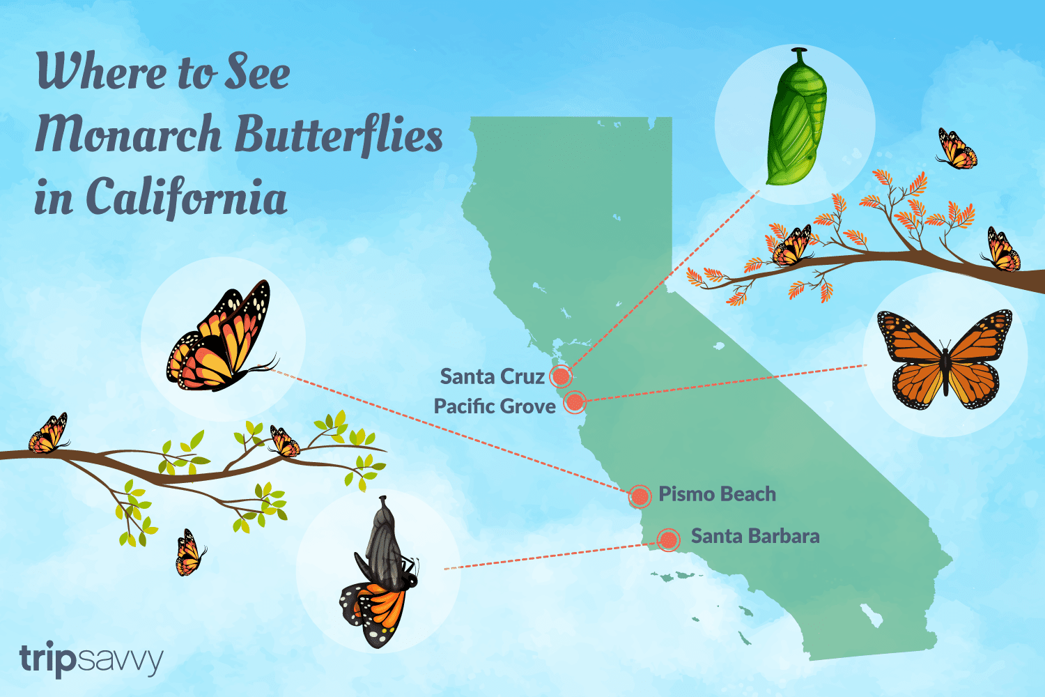 Where to See the Monarch Butterflies in California