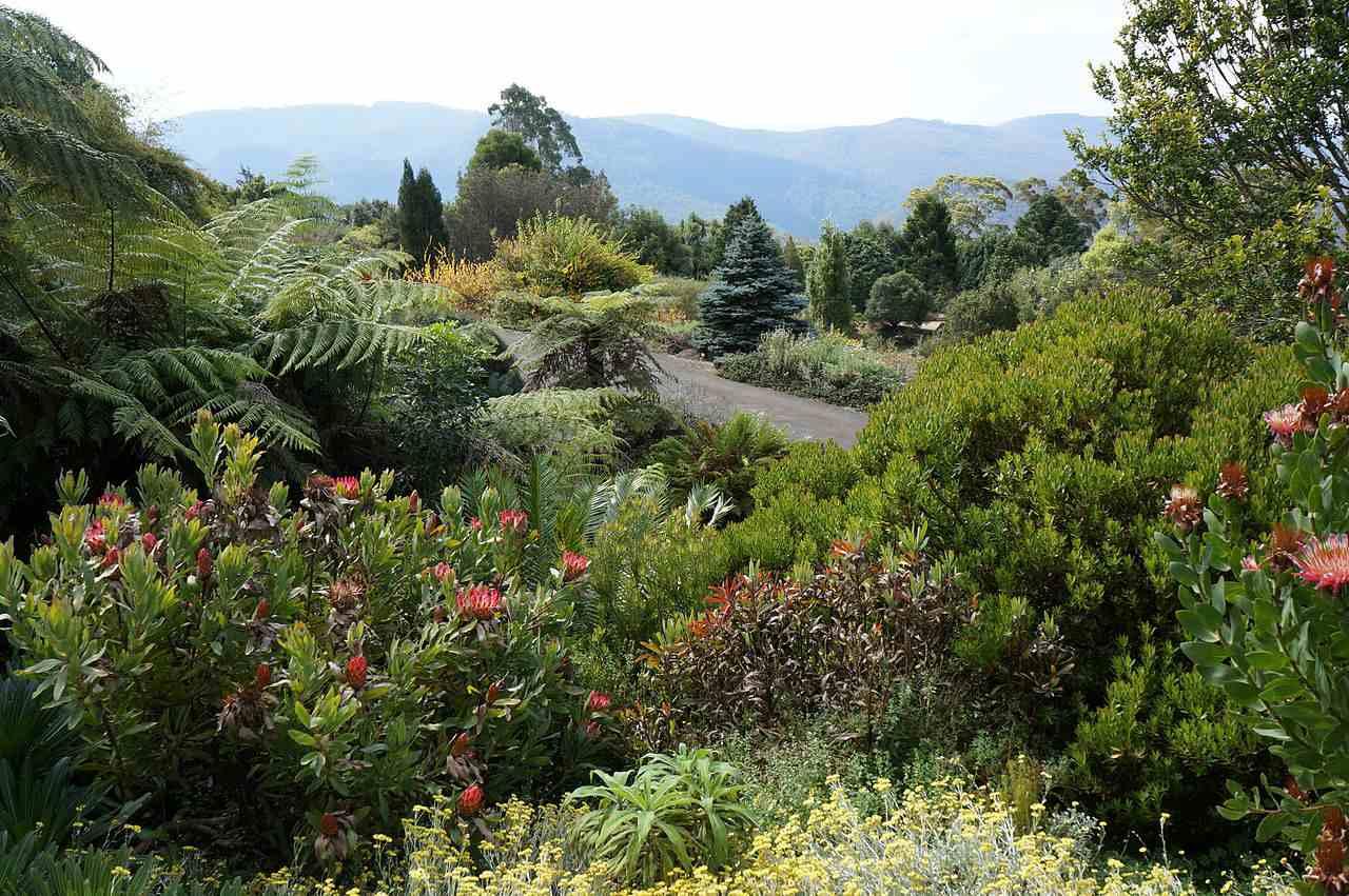 The botanical gardens at Mt. Tomah.