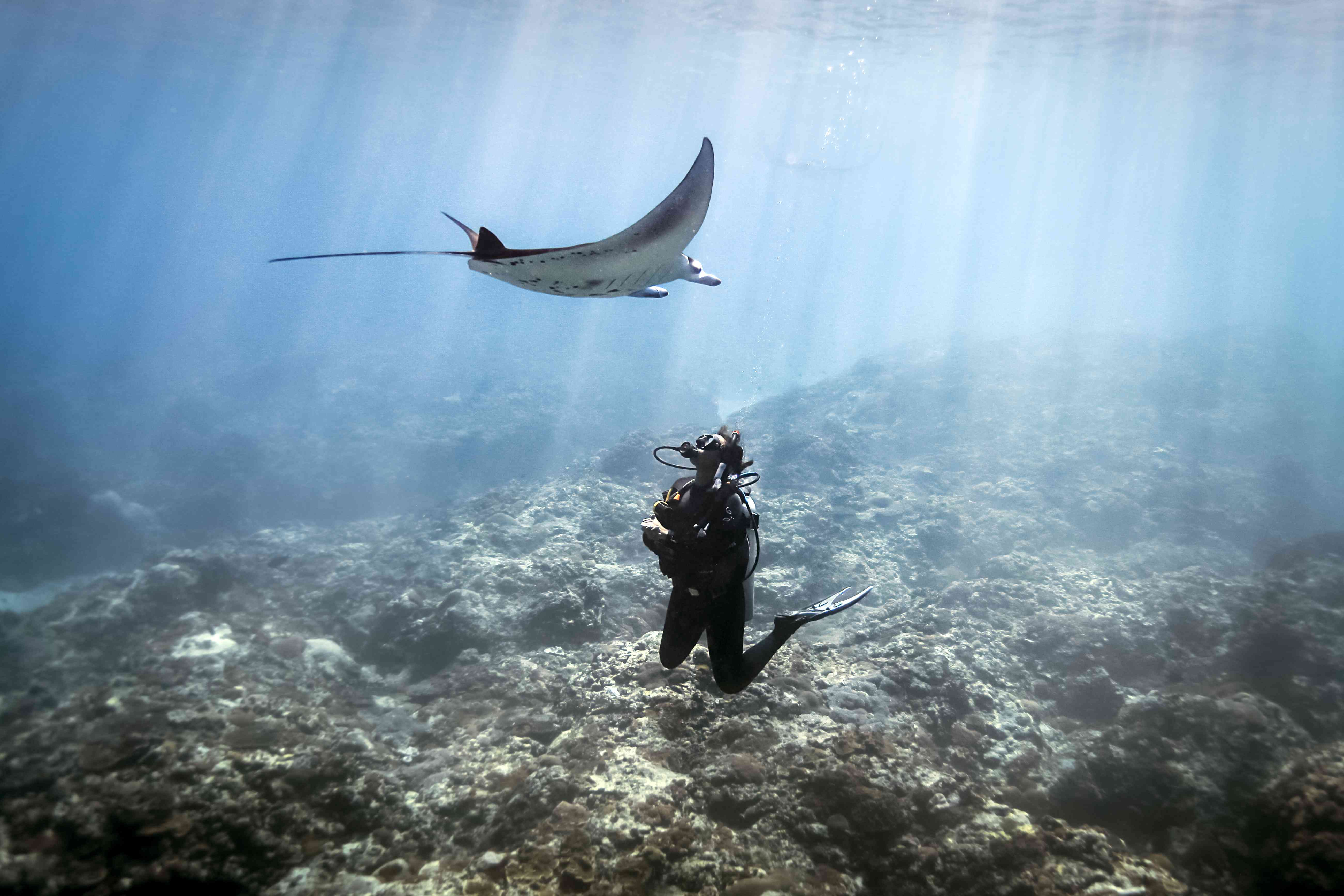 Top Dives Sites In Bali Indonesia