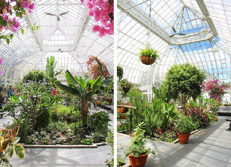 Inside the Westmount Greenhouses