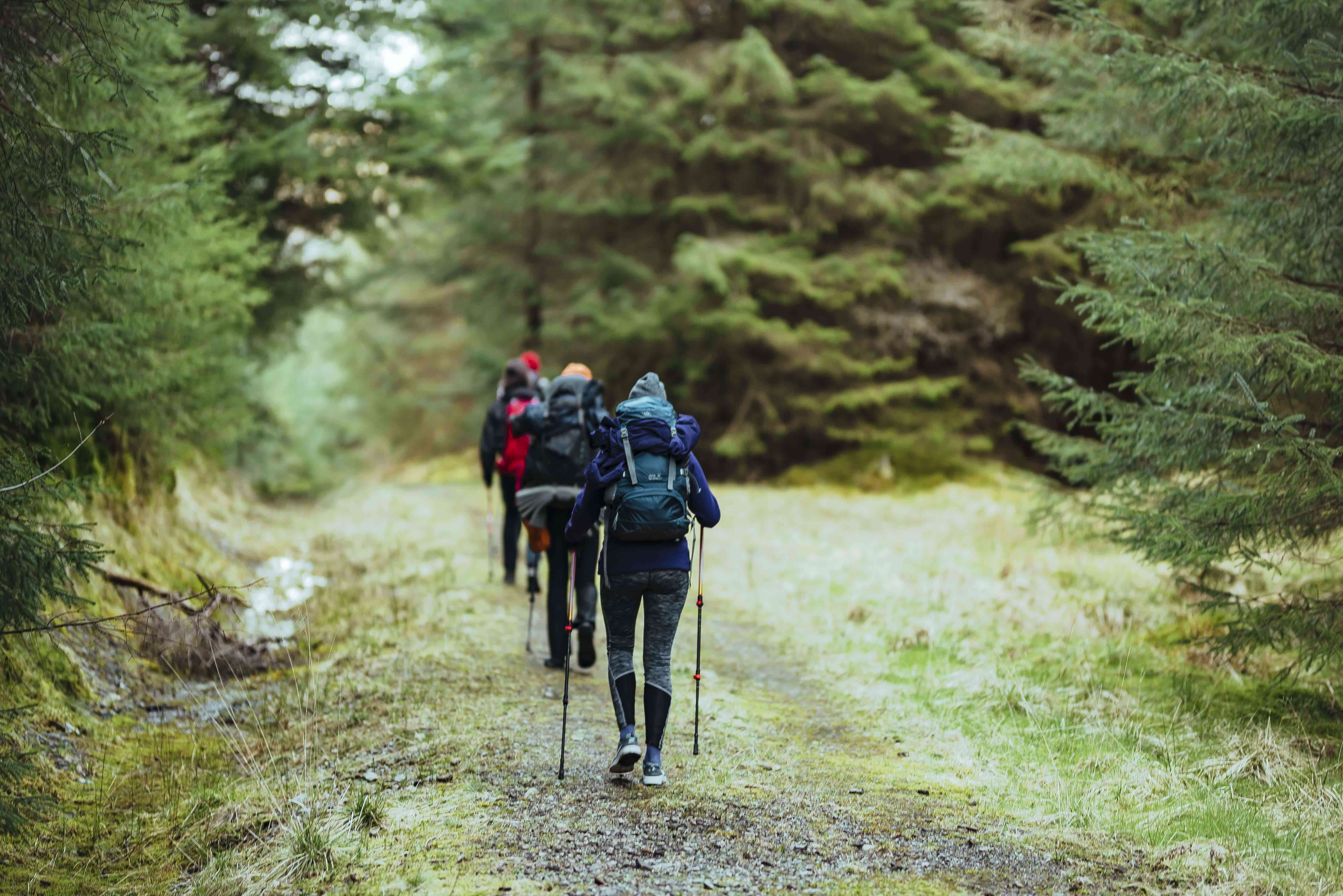 A group of people hiking through the forest