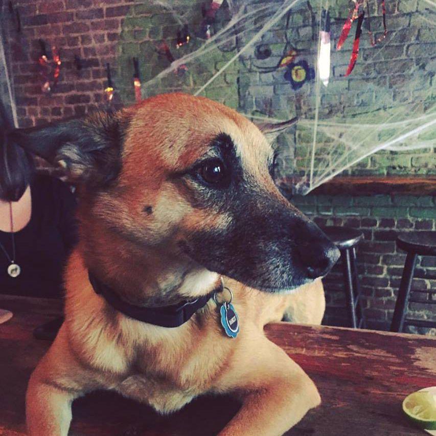 Luckydog Brooklyn